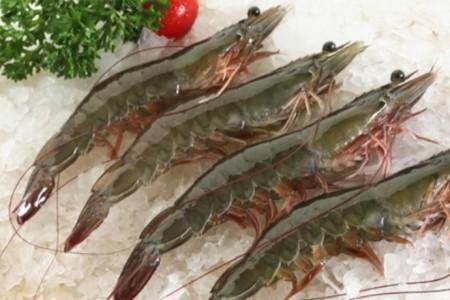 """浙江:三门""""智慧海水""""养优质对虾"""