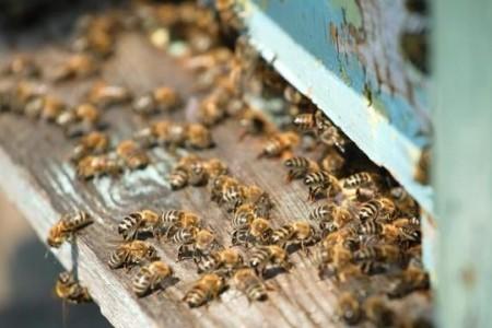 冬天养蜂怎么保暖?冬季养蜂和保温的正确方法
