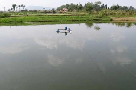 池塘养殖一亩能养多少?每亩多少斤?