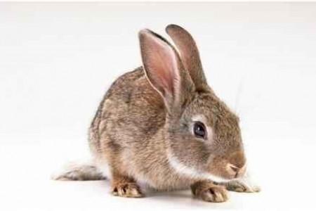 养兔子能赚钱吗?如何找到养兔的市场?
