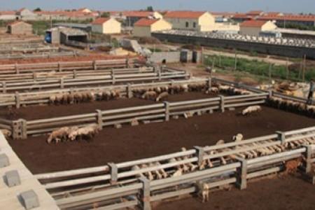 是什么让羊棚保暖?羊舍冬天合适的温度是多少?