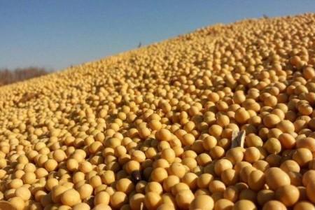 上周,中国购买了6万吨美国老豆和20万吨美国新豆