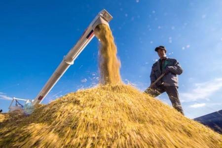 优质春耕为一年一度的粮食丰收打下坚实的基础