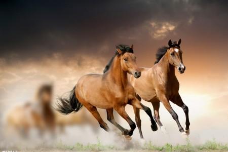 走有中国特色的现代马业发展之路——农业农村部和国家体育总局有关部门负责同志解读《全国马业发展规划(2020-2025年)》