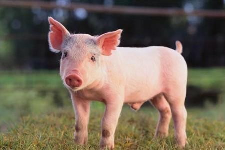 6月生猪价格即将反弹?业内预测本轮最低点还是在14-15元/公斤