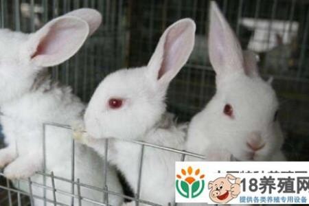 现在养殖100只兔子的利润是多少? _动物养殖(养兔子的技巧)