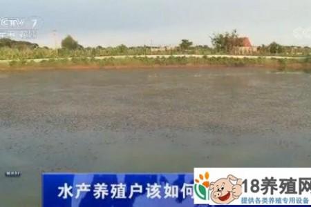 水产养殖者应该如何应对炎热的天气 _水产养殖(养河蟹的技巧)