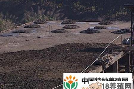 郑彩露:猪鱼循环立体养殖,猪粪致富路 _水产养殖(养乌龟的技巧)