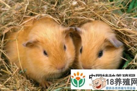 竹鼠的养殖前景和效益如何? _动物养殖(养竹鼠的技巧)