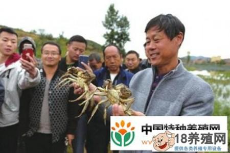 你什么时候把蟹苗放在稻田里?每亩有什么好处? _水产养殖(养河蟹的技巧)
