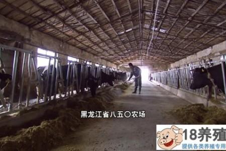 靠牛粪一年赚几百万,小蚯蚓盘活一条绿色产业链! _昆虫养殖(养蚯蚓的技巧)
