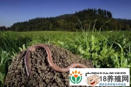 利用闲置资源养殖蚯蚓,每亩净利润1万元! _昆虫养殖(养蚯蚓的技巧)