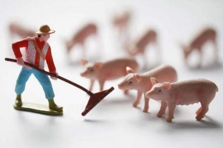 养猪机械化有助于北京恢复生产和产业升级