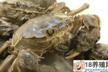 大闸蟹、小龙虾、鳜鱼生态混养,亩产过万元! _水产养殖(养河蟹的技巧)