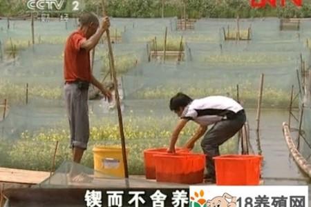 余建国坚持养殖鳗鱼,净收入50多万元 _水产养殖(养黄鳝的技巧)