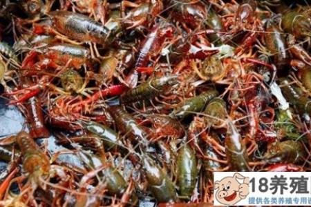 小龙虾苗多少钱?一亩小龙虾的成本利润是多少? _水产养殖(养河虾的技巧)