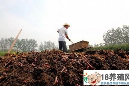 用稻草牛粪养蚯蚓,让刘芳走上了创业致富的道路 _昆虫养殖(养蚯蚓的技巧)