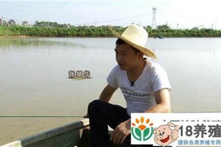 江西张华斌改变了他的问题,养了泥鳅,年收入1000万 _水产养殖(养泥鳅的技巧)