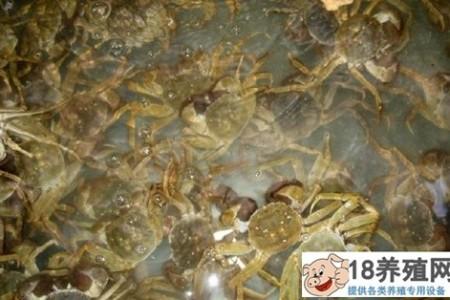 """分段生态养蟹:小水池""""吃水""""集约化养殖 _水产养殖(养河蟹的技巧)"""