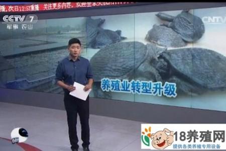 如何在浙江省桐庐县甲鱼养殖转型中减少养殖户的损失 _水产养殖(养乌龟的技巧)