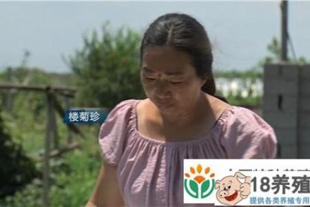 浙江宁波的娄菊珍喜欢夫妻养乌龟,玩游戏挣钱 _水产养殖(养甲鱼的技巧)