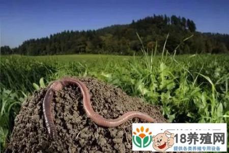小蚯蚓用处很大,可以把禽畜粪便变成软黄金! _昆虫养殖(养蚯蚓的技巧)