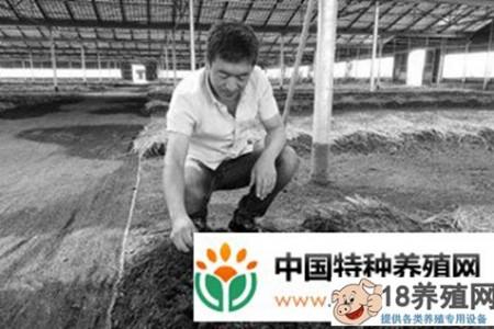 卖15元,每斤养一亩,收入五六万元 _昆虫养殖(养蚯蚓的技巧)