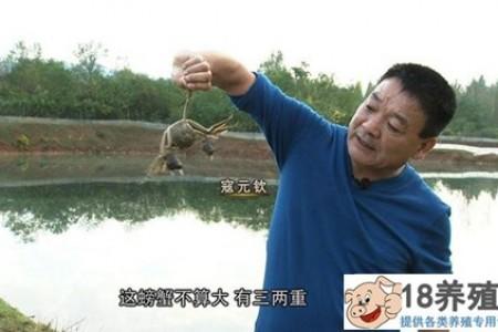 """寇在""""魔咒""""春天养螃蟹,三个月就能拿到2000万! _水产养殖(养河蟹的技巧)"""