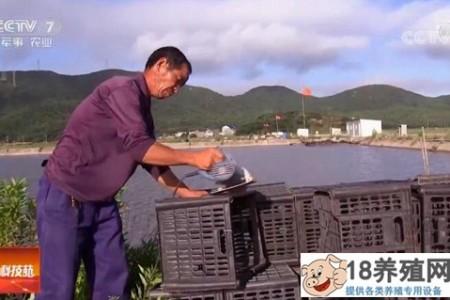 杜志芳用废塑料筐养螃蟹赚了100万! _水产养殖(养河蟹的技巧)