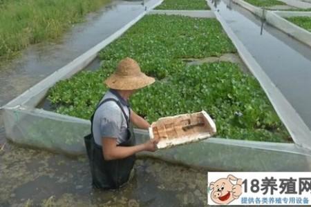 每亩投资多少,每亩收益多少? _水产养殖(养水蛭的技巧)
