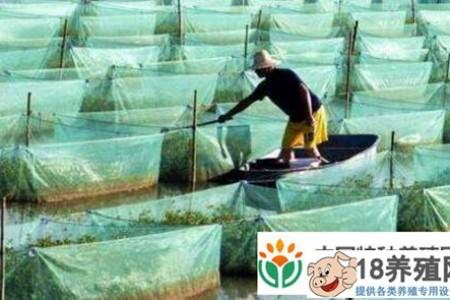 要抵御鳗鱼养殖风险,就要抱团发展 _水产养殖(养黄鳝的技巧)
