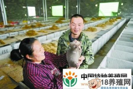 江永县贺:仿竹鼠生态养殖年产值过百万 _动物养殖(养竹鼠的技巧)
