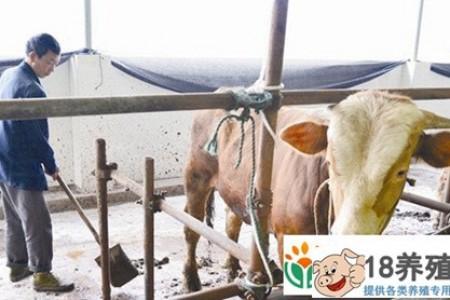 有一个很好的方法可以从牛粪中养蚯蚓,通过循环农业来喂养鸡和鱼 _昆虫养殖(养蚯蚓的技巧)