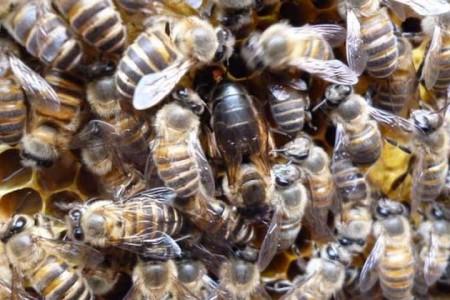 培育蜂王的基本条件