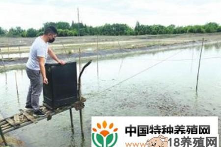 年轻人隔岸养殖台湾省鳗泥鳅,一亩一季纯利润一万多元! _水产养殖(养泥鳅的技巧)