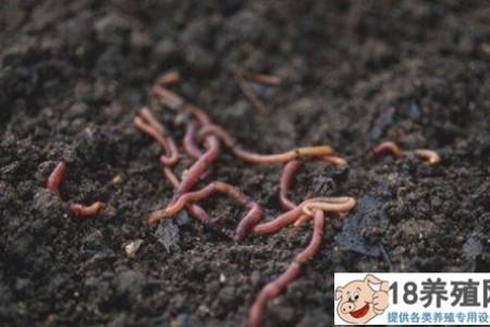 蚯蚓养殖效率高,有办法养好蚯蚓! _昆虫养殖(养蚯蚓的技巧)