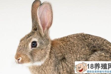 养殖兔子消化不良的症状在哪里? _动物养殖(养兔子的技巧)