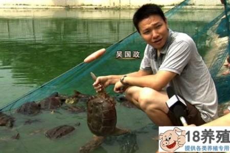 回到吴养乌龟不走寻常路,一年挣1000万元 _水产养殖(养乌龟的技巧)