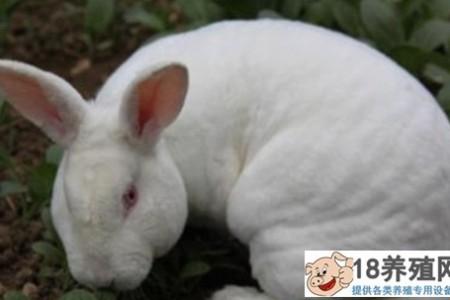 养殖的兔子喜欢吃什么草? _动物养殖(养兔子的技巧)