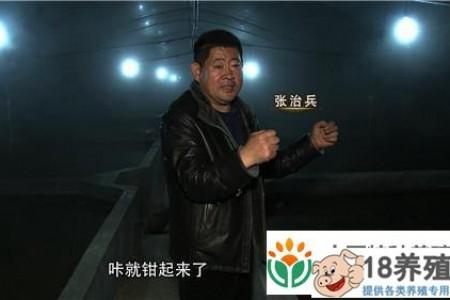 山东张志兵在温室里养螃蟹,三个月赚了500多万元 _水产养殖(养河蟹的技巧)