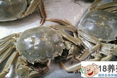 大闸蟹的价格是多少?养殖利润大吗? _水产养殖(养大闸蟹的技巧)