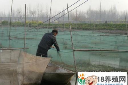 网箱养殖甲鱼的管理技术 _水产养殖(养甲鱼的技巧)