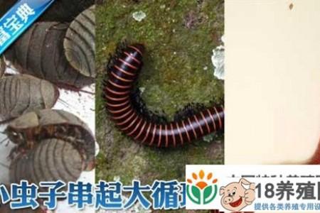 土元、马鹿、蚯蚓立体循环养殖技术 _昆虫养殖(养土元的技巧)