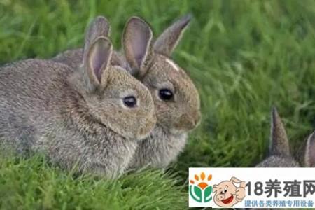 你现在靠养兔子挣钱吗?为什么这么多人赔钱 _动物养殖(养兔子的技巧)