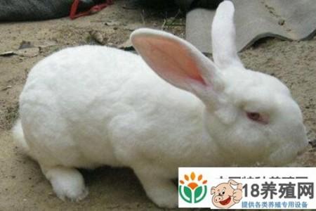 2020年养兔盈利吗? _动物养殖(养兔子的技巧)