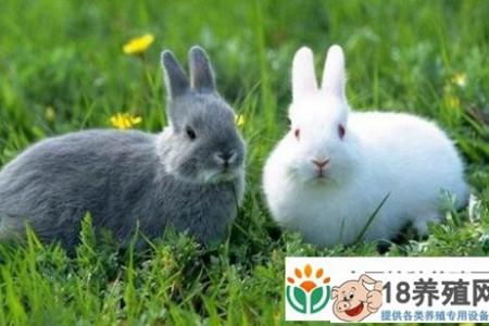 新手养兔人现在应该注意什么? _动物养殖(养兔子的技巧)