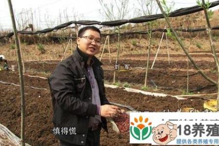 江西新丰刘军放弃返乡创业财富,高薪养蚯蚓 _昆虫养殖(养蚯蚓的技巧)