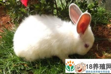 兔舍对养兔的环境要求是什么 _动物养殖(养兔子的技巧)