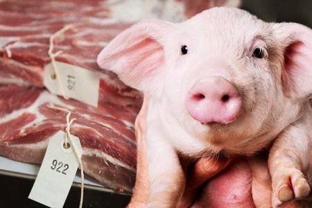 自去年6月中国停止进口英国冻肉以来,英国猪肉加工企业开始寻求援助
