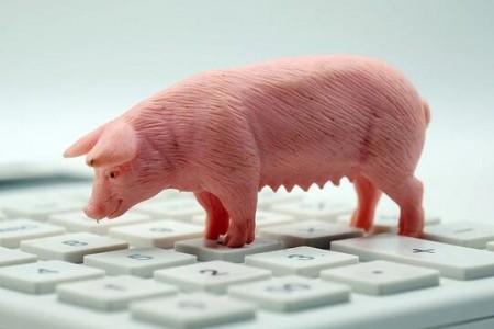 生猪期货20年底获批。猪肉价格能否告别大幅涨跌?